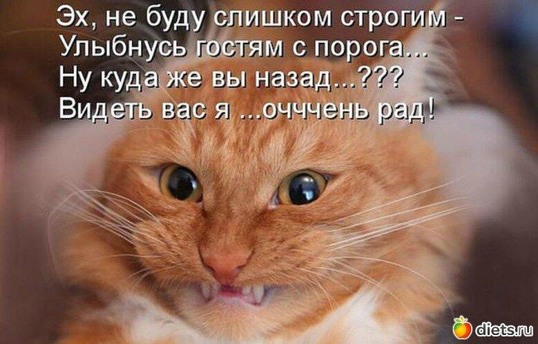 Рыжий кот картинки прикольные с надписями, анимации