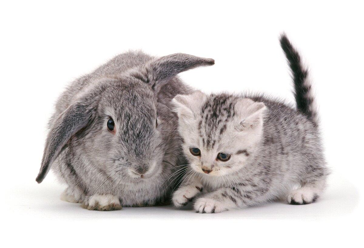 Красивые картинки с котятами кроликами
