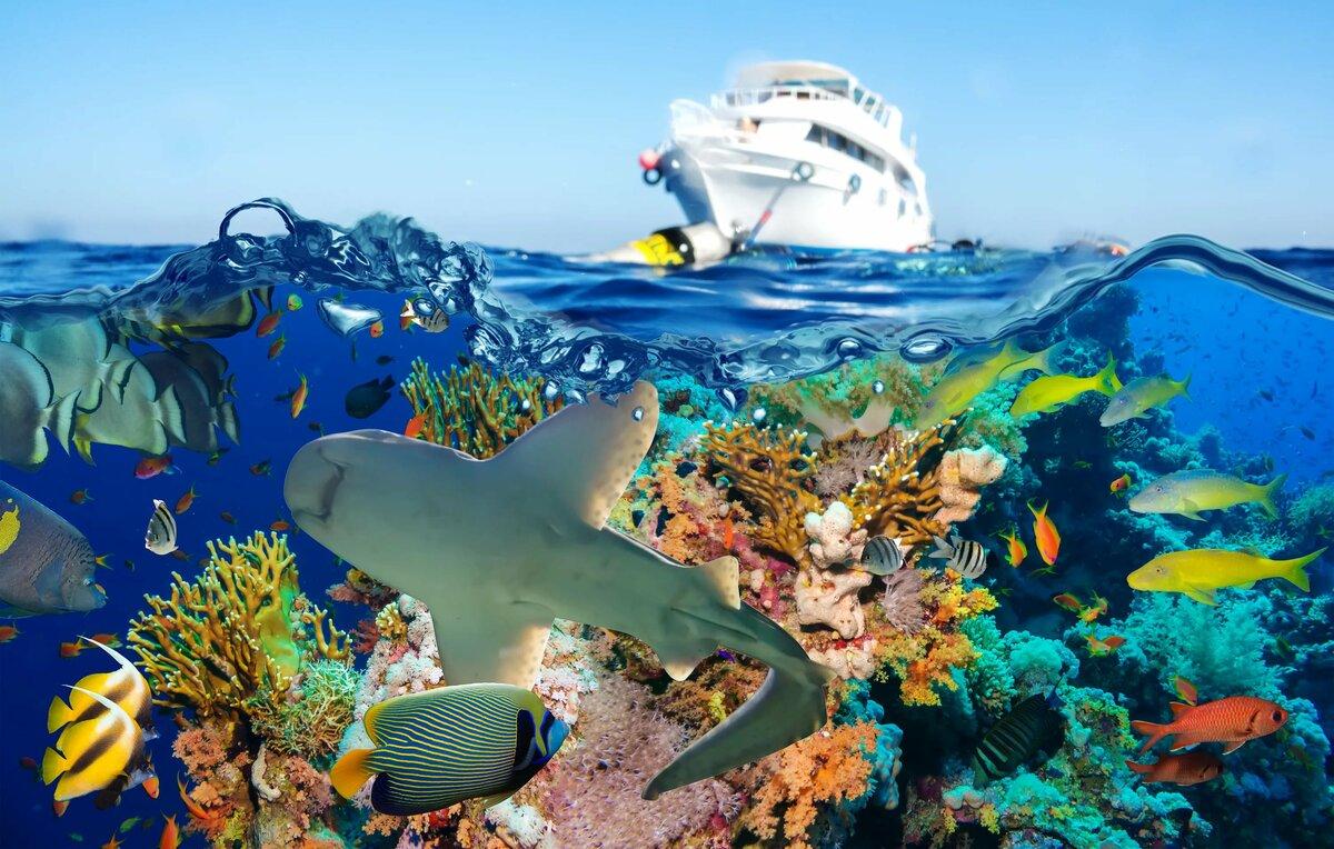 владельцев фото море и рыбы в высоком разрешении фото исполнении