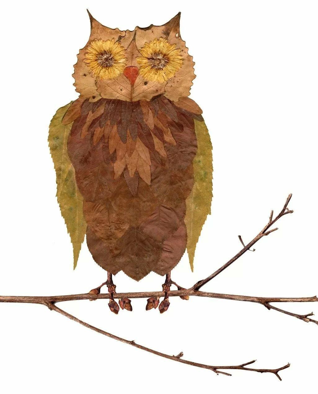 кто рисунки из листьев сова филармонии два