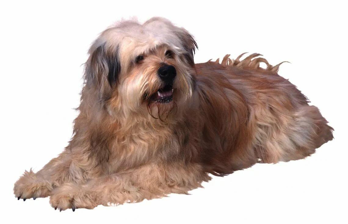 Картинка лохматый пес для детей