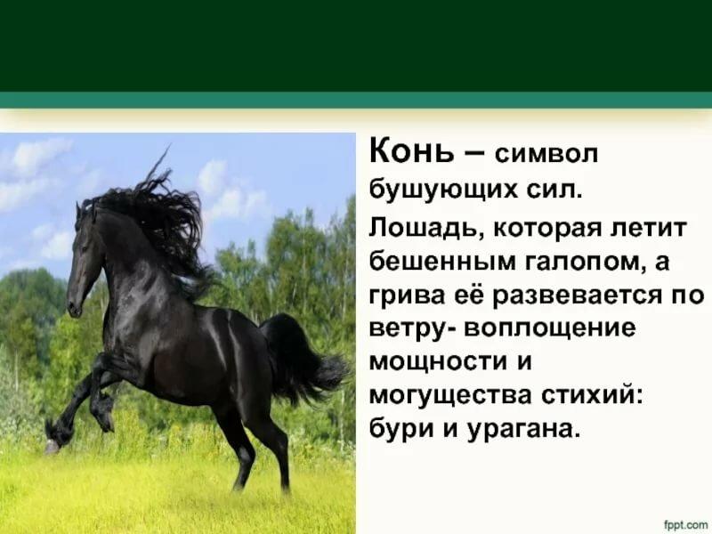 Лошади в дыбах картинки найдётся такой