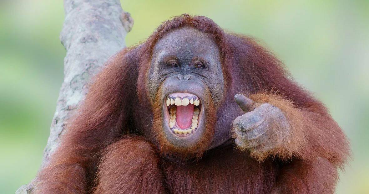 Картинки смеются животные