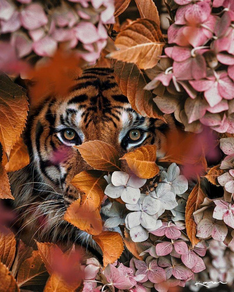 картинки тигры с розами выделяют различные