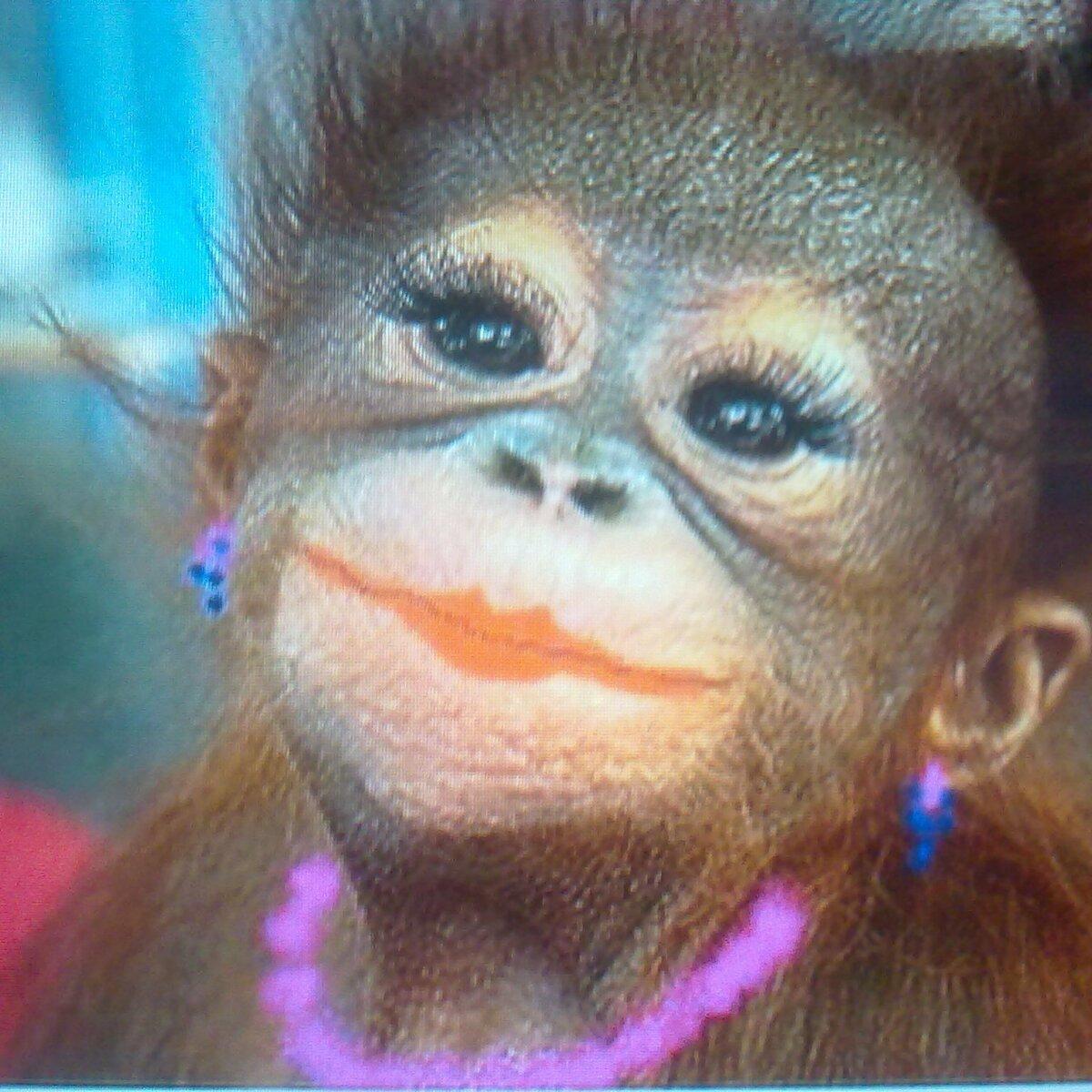 этом картинка с обезьяной накрасилась тут