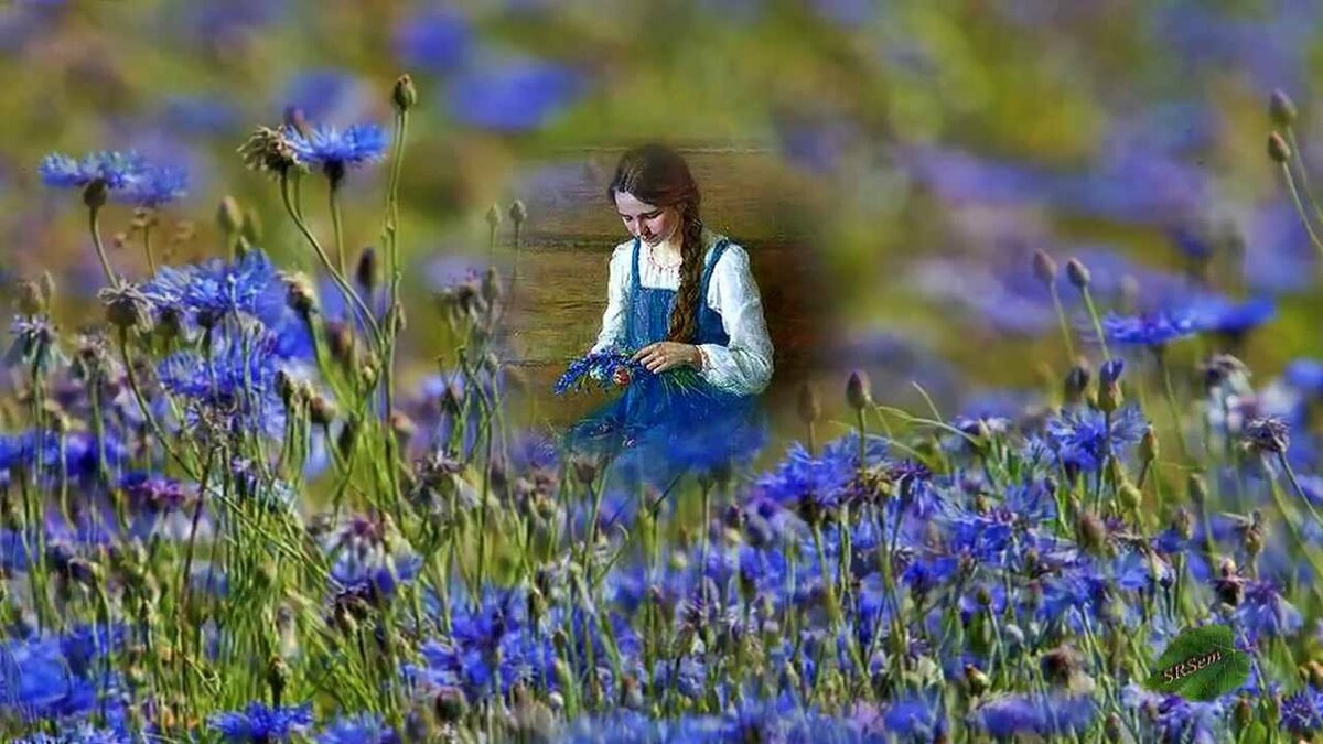 врача выбирают фото гифка поле с полевыми цветами для евгении днем