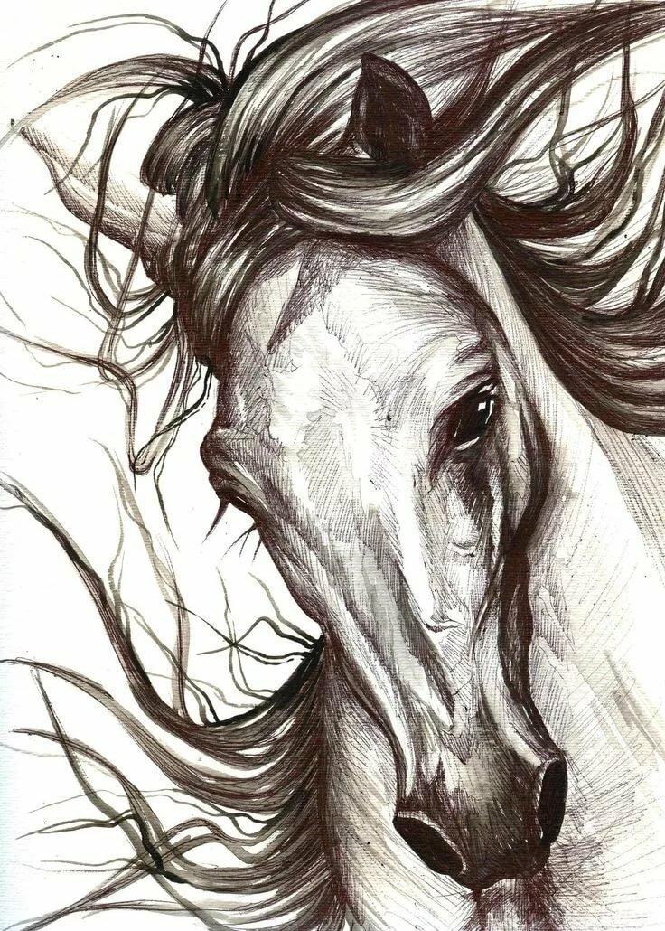 Картинки с лошадьми рисунки