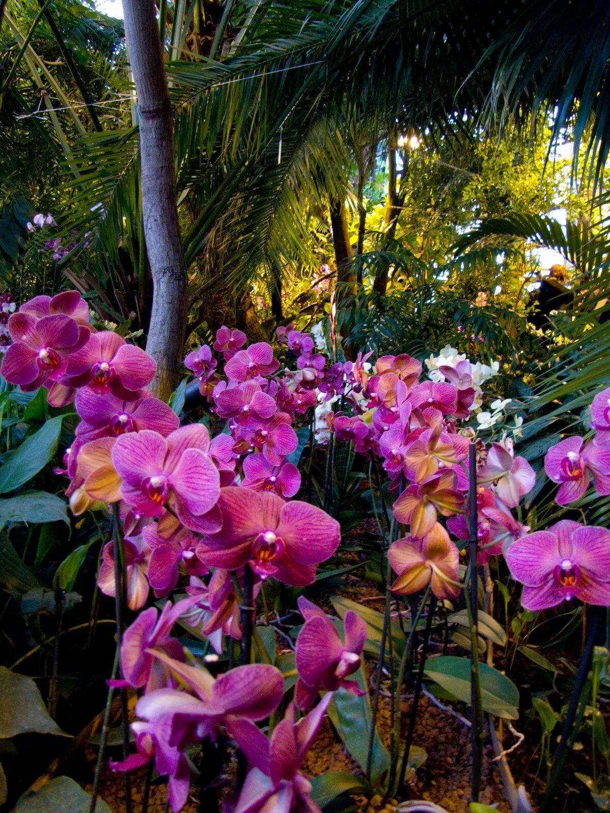 натяжной орхидеи в естественных условиях фото изделие