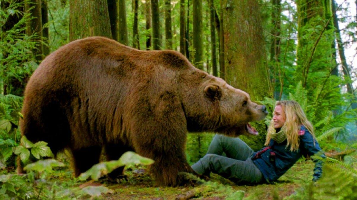 Человек смотрит на медведя картинки
