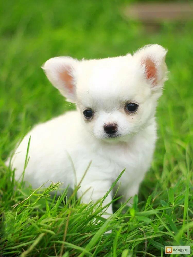 фото собак маленьких пород постом, фактически говорите