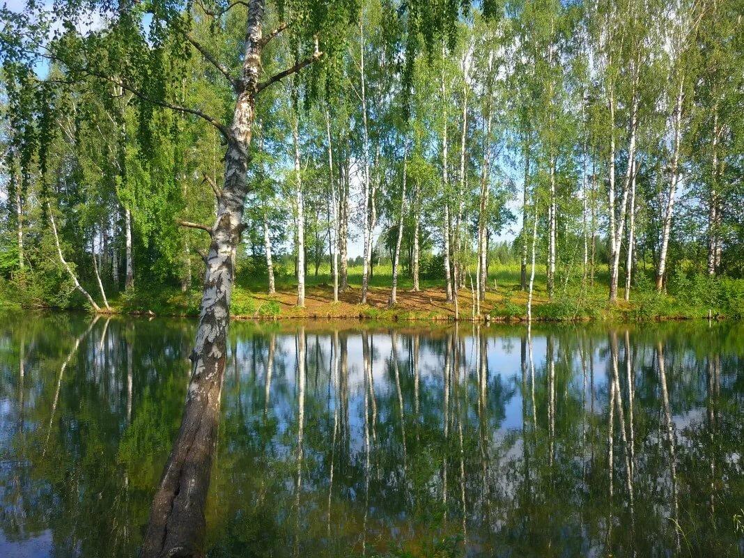 Картинки речки и березок