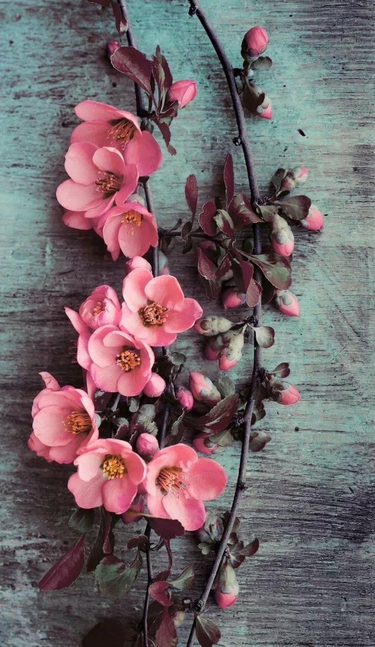 Цветок на айфон картинки