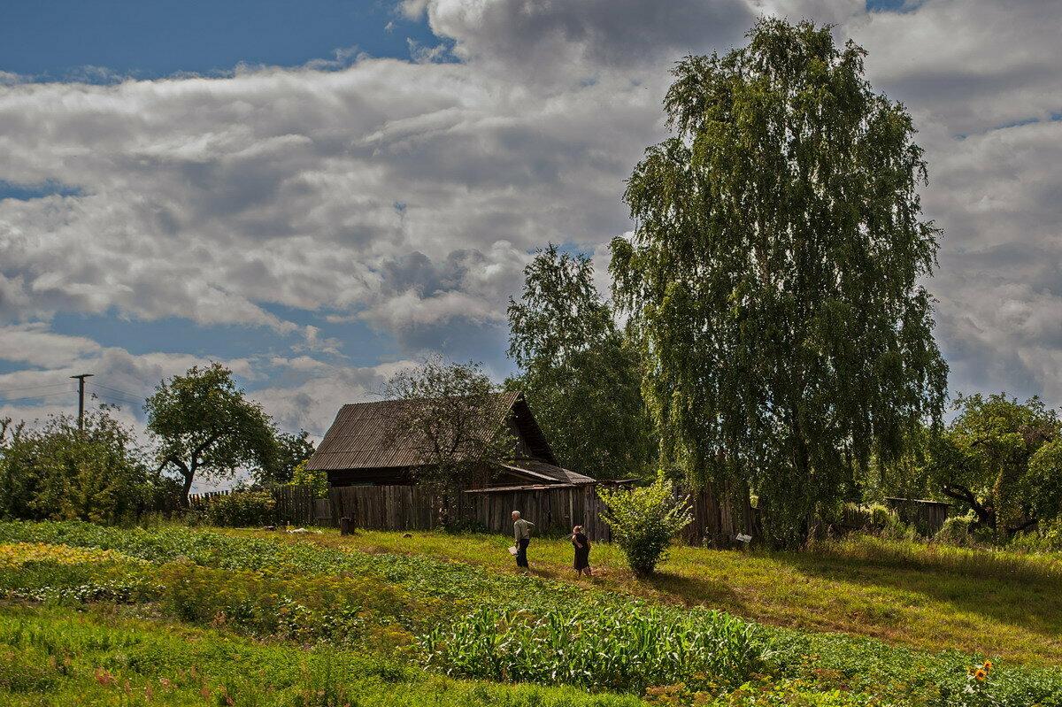 заказать красивые пейзажи деревни картинки шуя болотистая