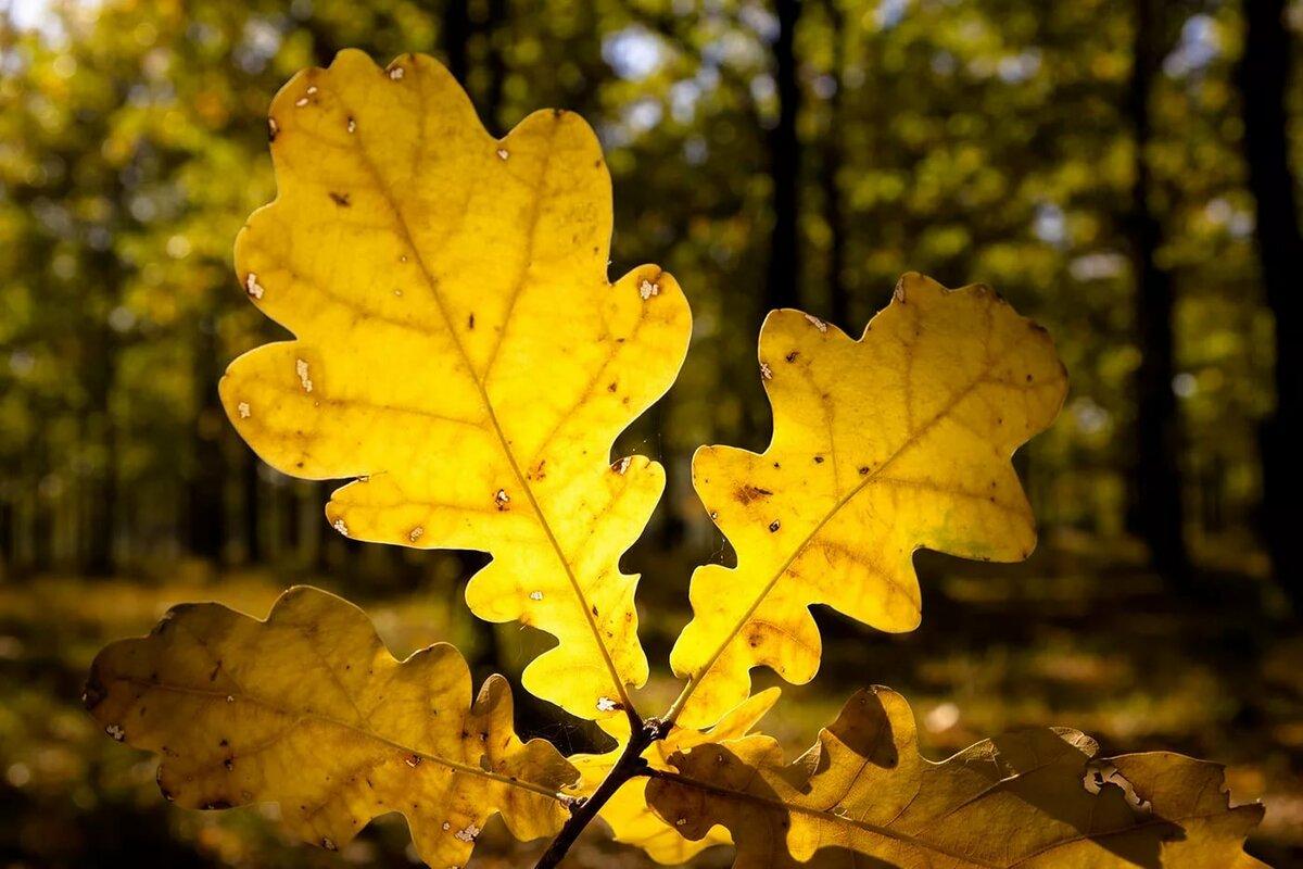 станциях, имеющих фото с дубовыми листьями лишь