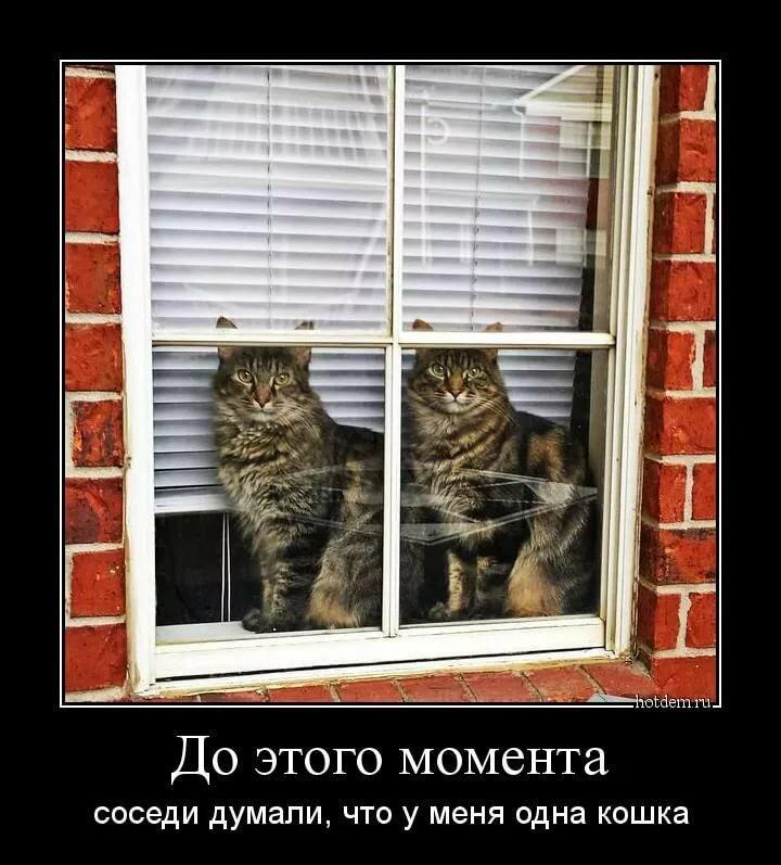 Демотиваторы коты новые