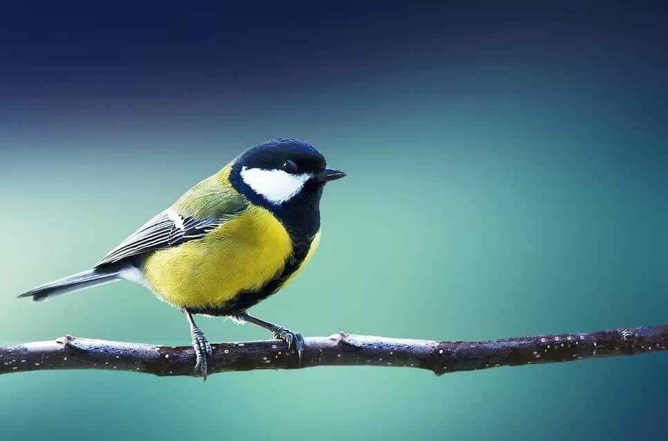таких изображение птиц картинки она настолько огромна
