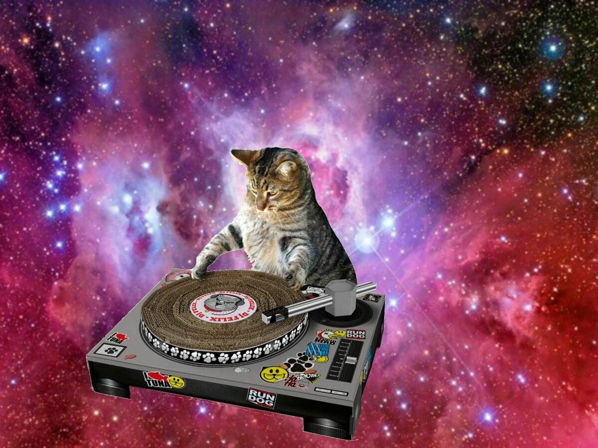 Смешные коты с музыкой