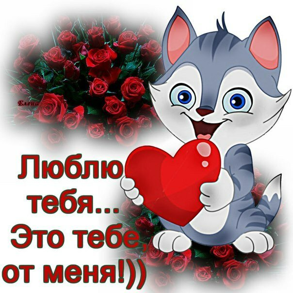 Картинка я тебя люблю с котиками