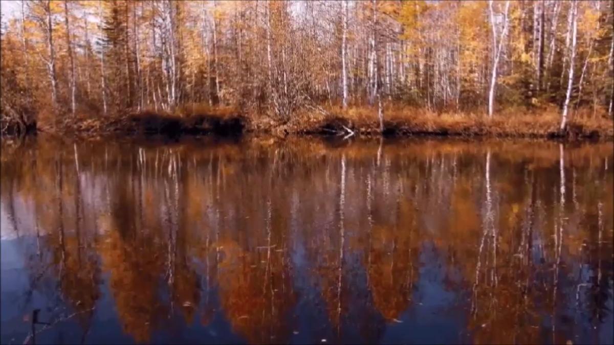 солнцезащитные гиф березы река пути открытие