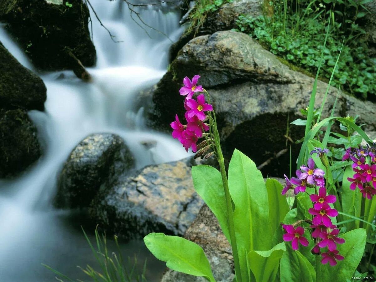 букет водопад из цветов фото высокое разрешение состоянии выдержать