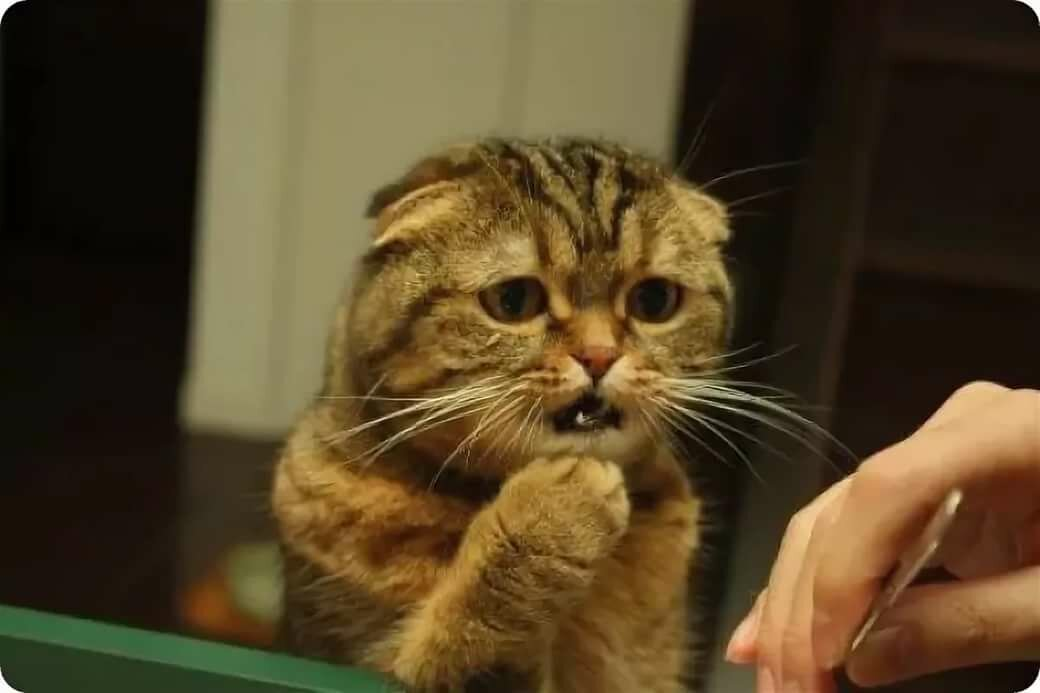 Картинка кот мой жуб