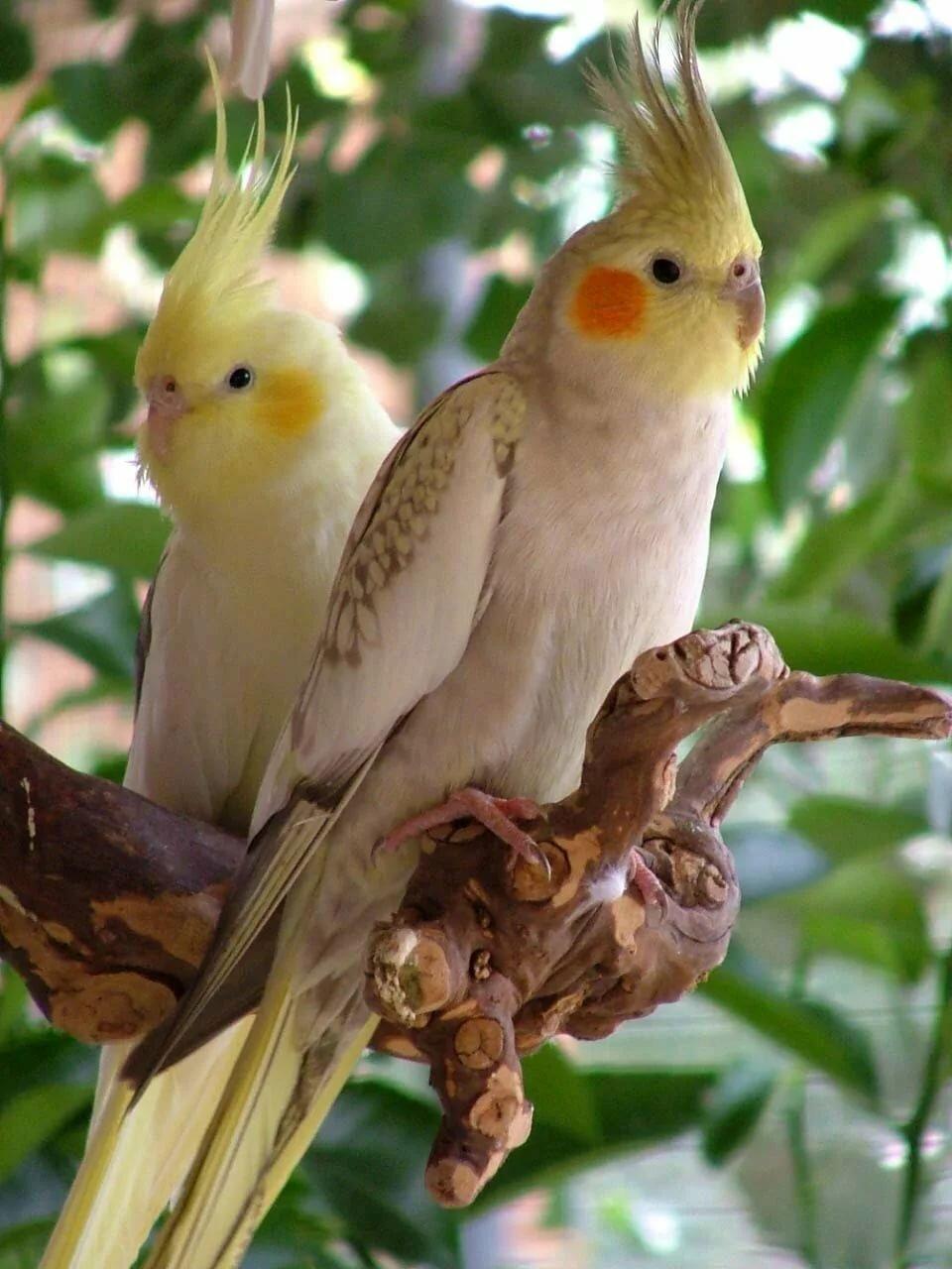 Я свободна как птица в небесах картинки что