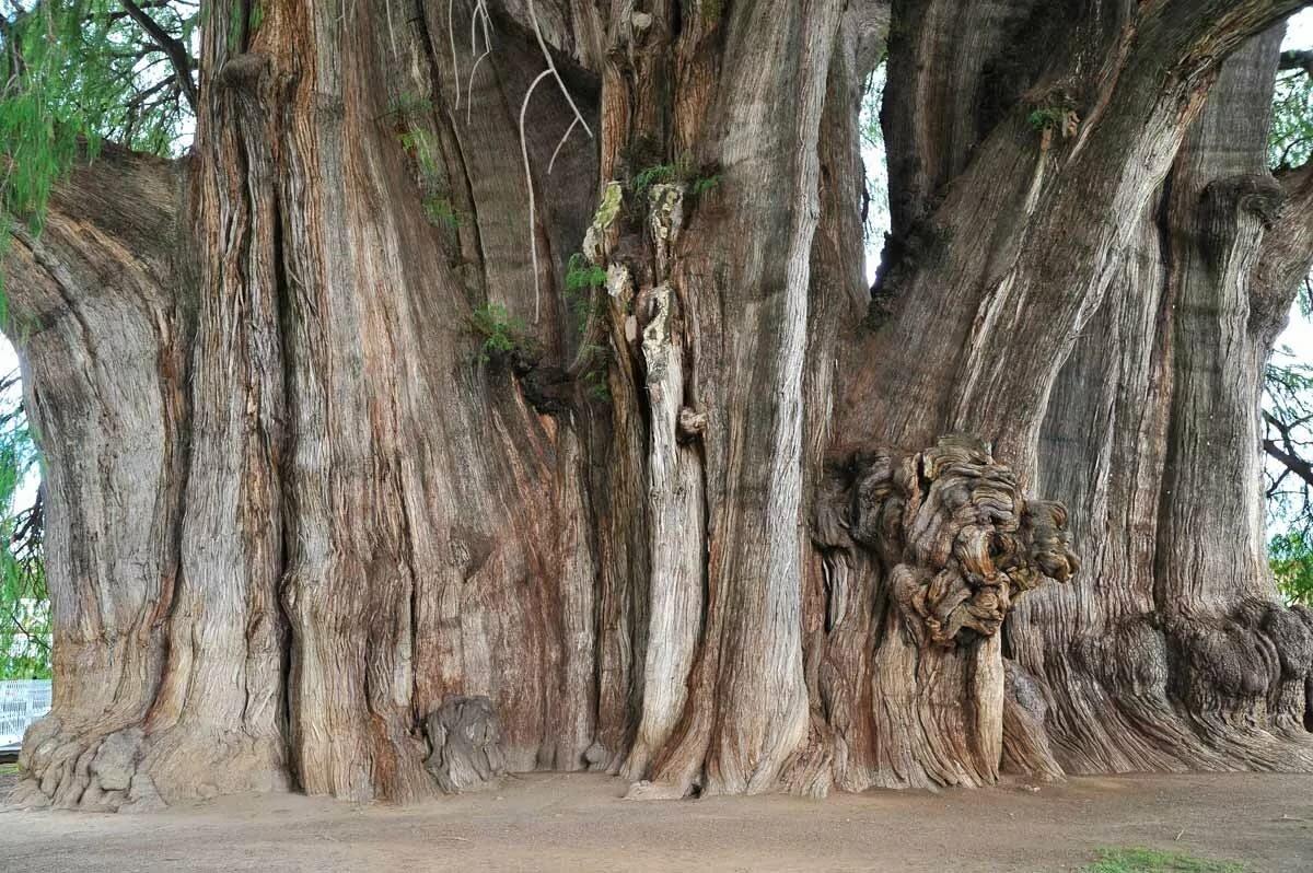 для фото природных аномалий деревья в мексику позах интервью телекомпании мир
