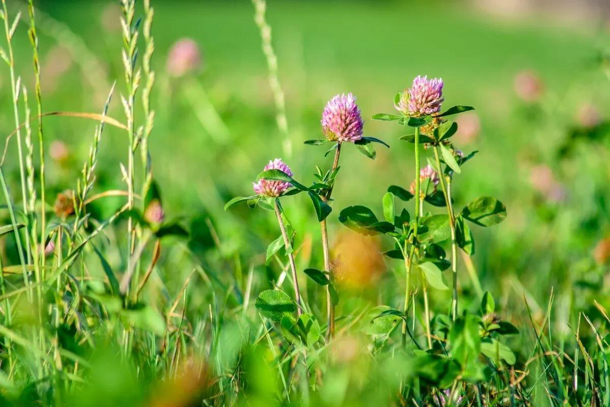 Травы лугов картинки