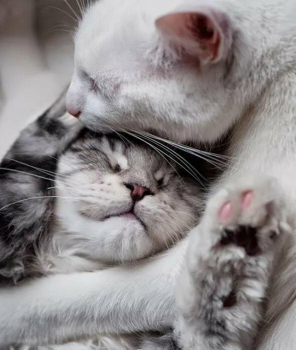 Картинки кошки нежность