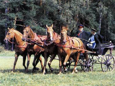 пять лошадей в упряжке картинки
