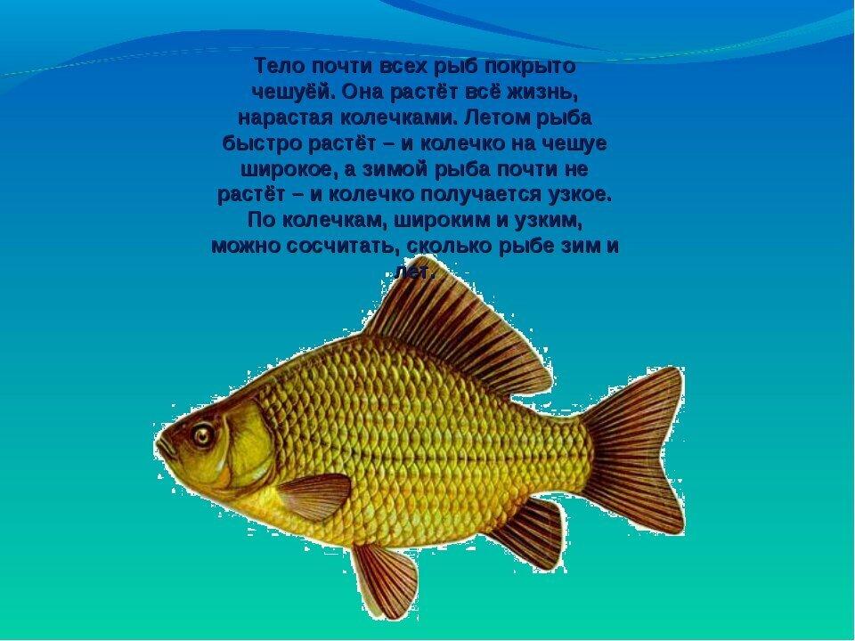проект о рыбках в картинках украшала многие
