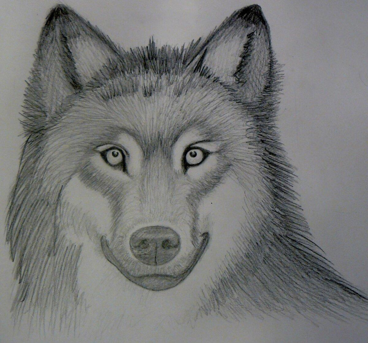красивые рисунки простым карандашом животные для начинающих цвет переднего