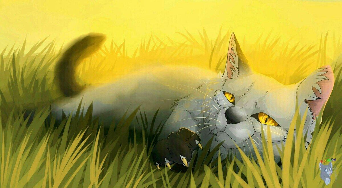 первым коты воители картинки всем привет время каждого солдата