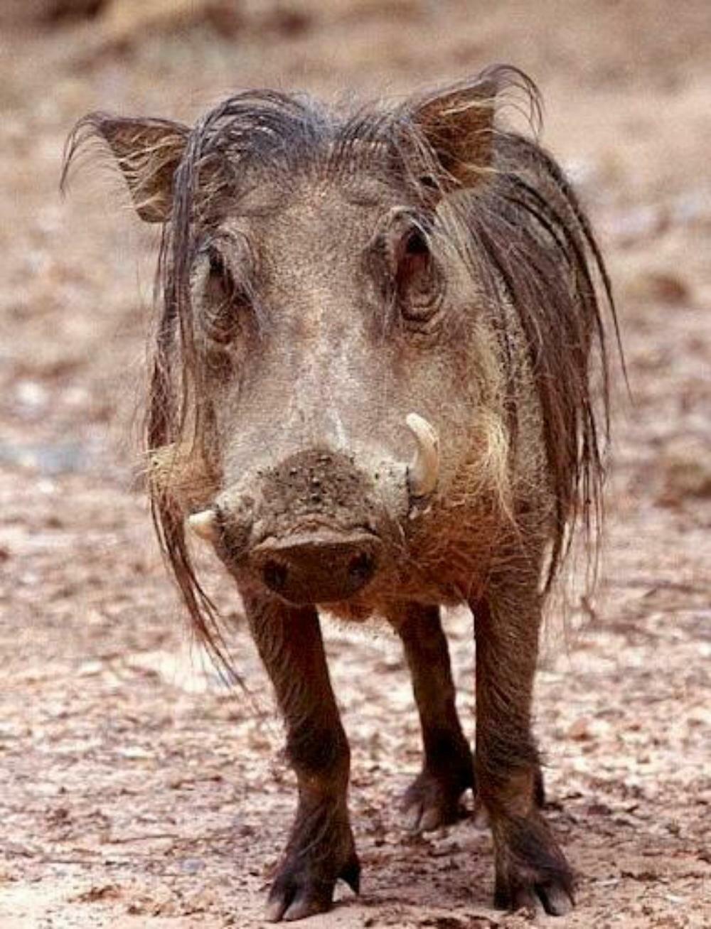 худая свинья фото подводном