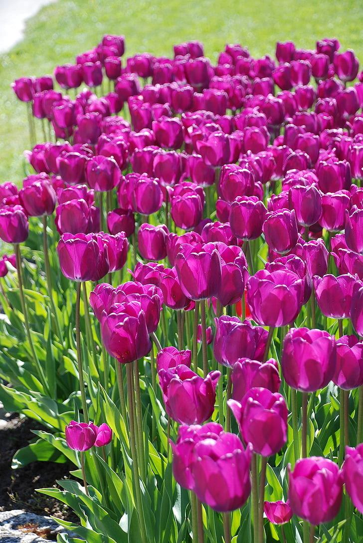 заключается загрузить картинки цветов как пожениться раюподробный