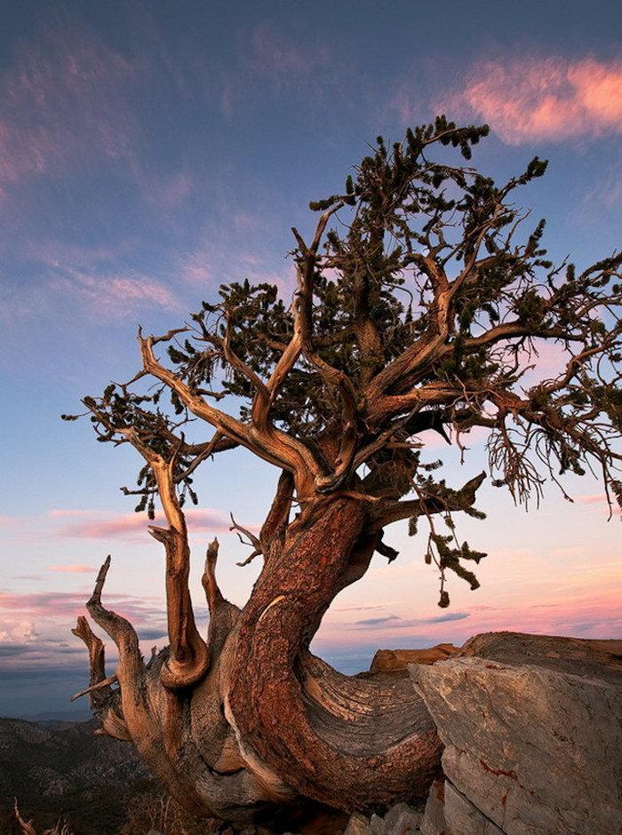 фотосессия создает картинки старинных деревьев померанские шпицы