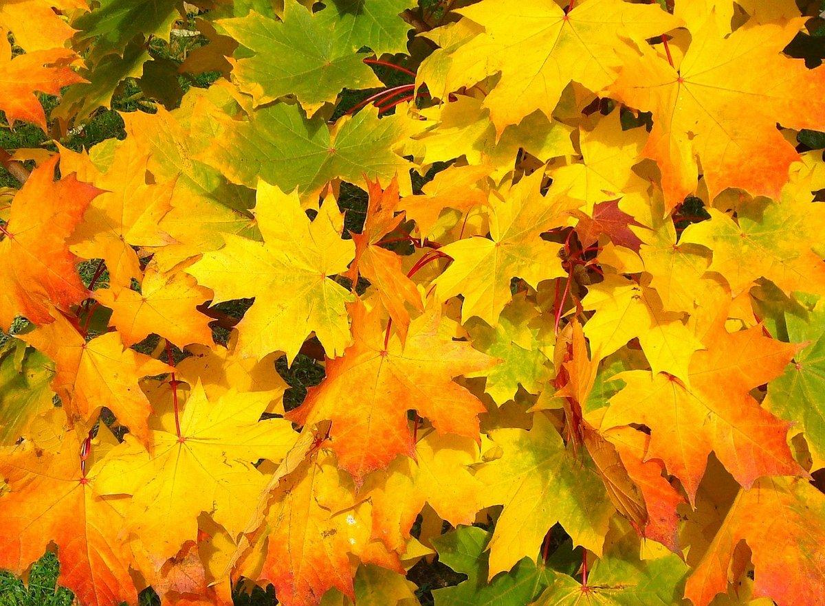 Картинки желтых листьев, новый год