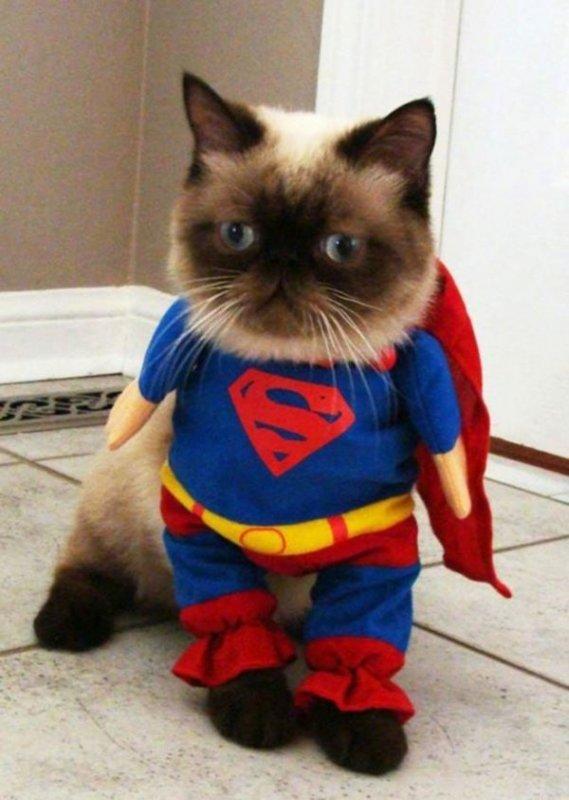 Картинки супер кот смешные