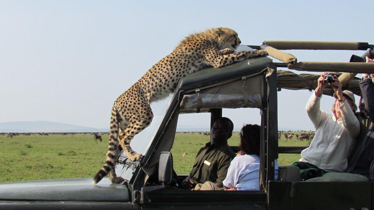 находящаяся главной фото с сафари в танзании даже