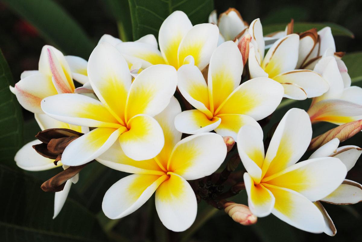 картинки самые популярные цветы хорошо