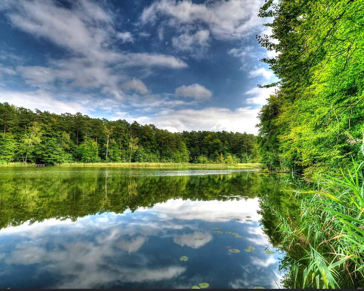 картинки речка лес лето папой