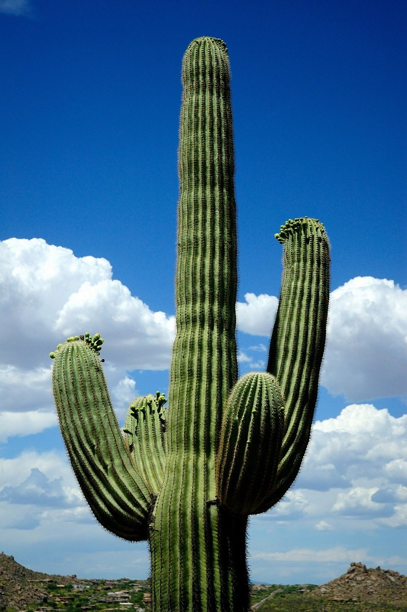 Картинки кактус в мексике