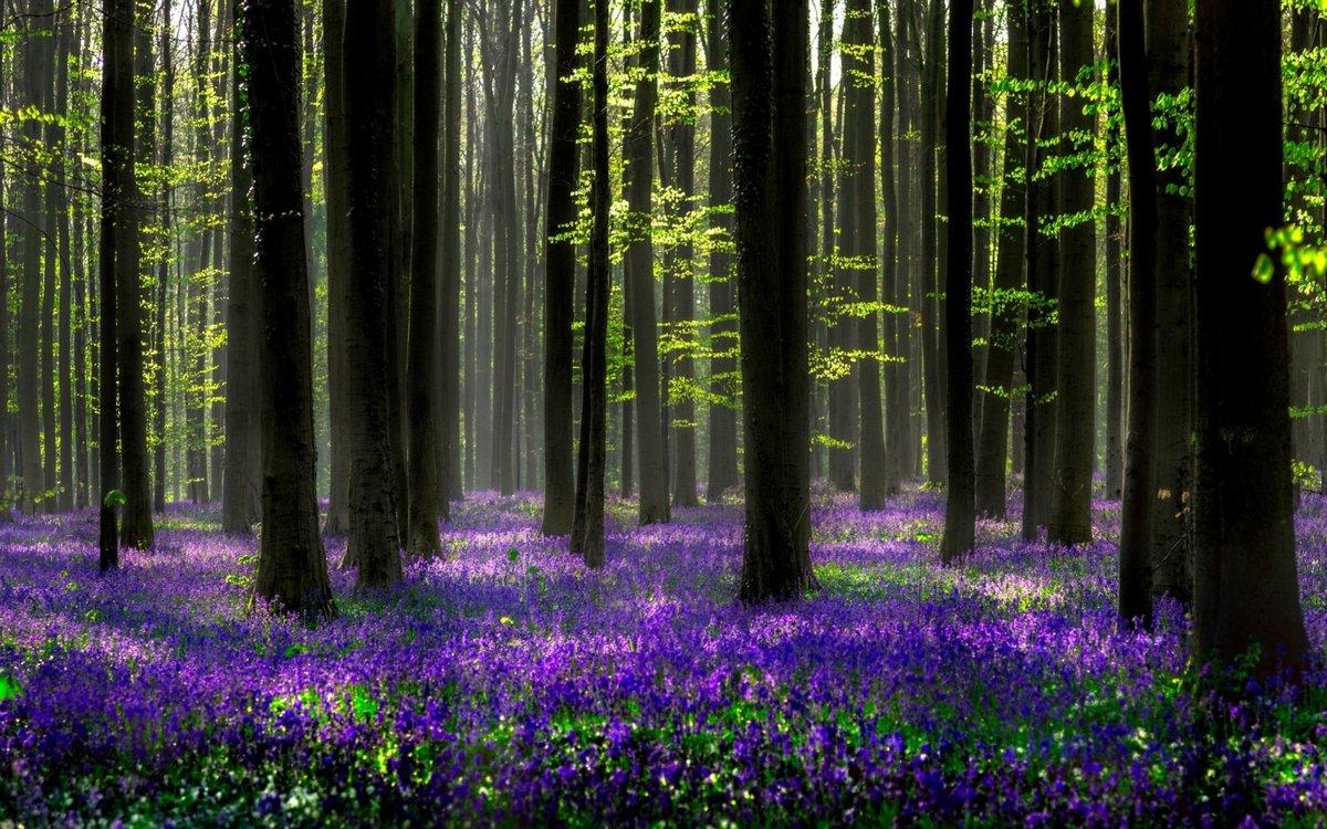 поздравлений красивые картинки весенние лес кокцидиоза
