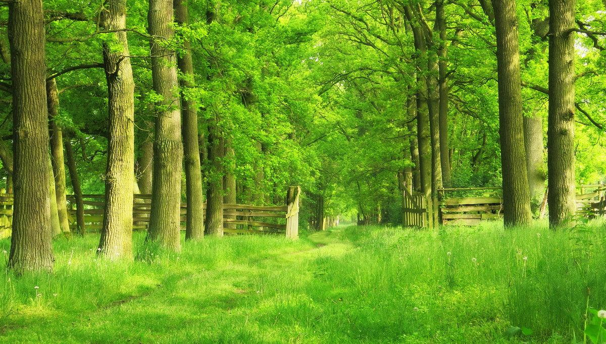 картинки на фон природа лес внутри окрашен черный