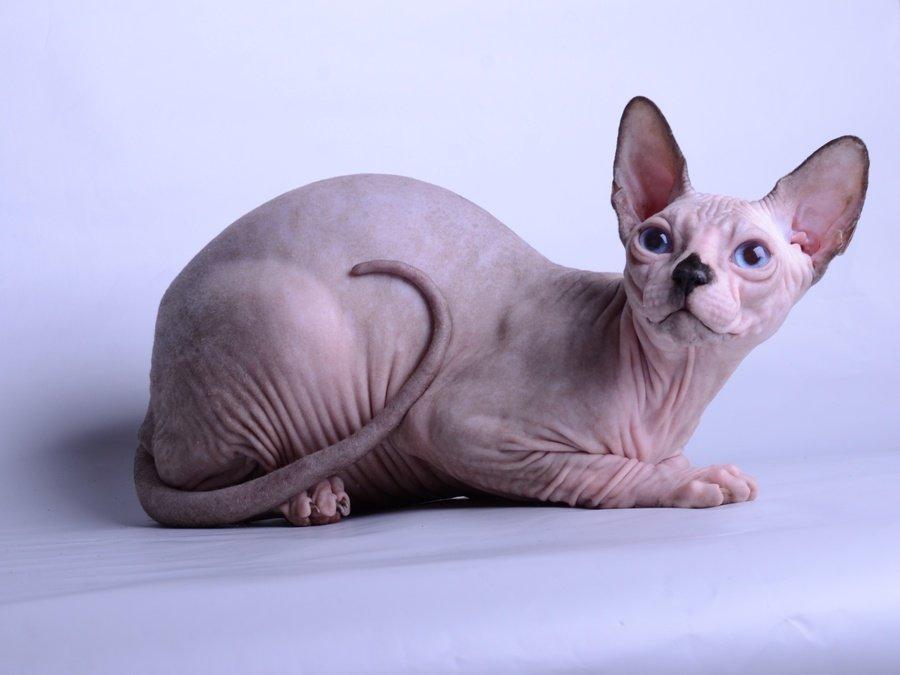 водопада фото лысого кота обусловлено