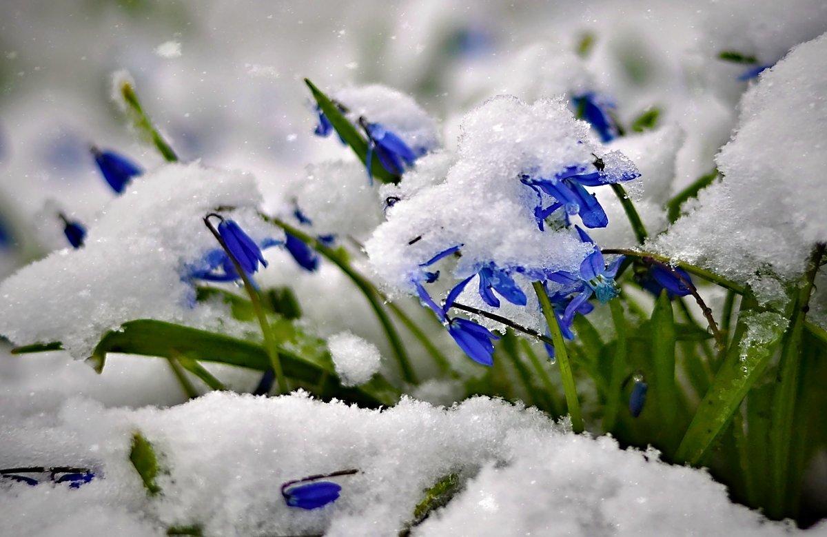 Открытки весна и снег, открытках первой