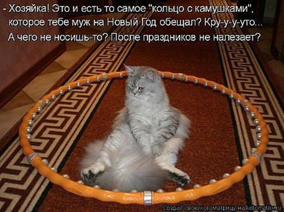 Для, смешные котята в картинках с надписями