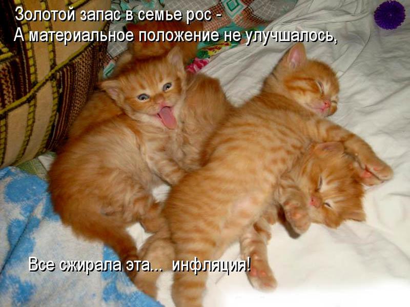 Смешные картинки котов кошек котят с надписями