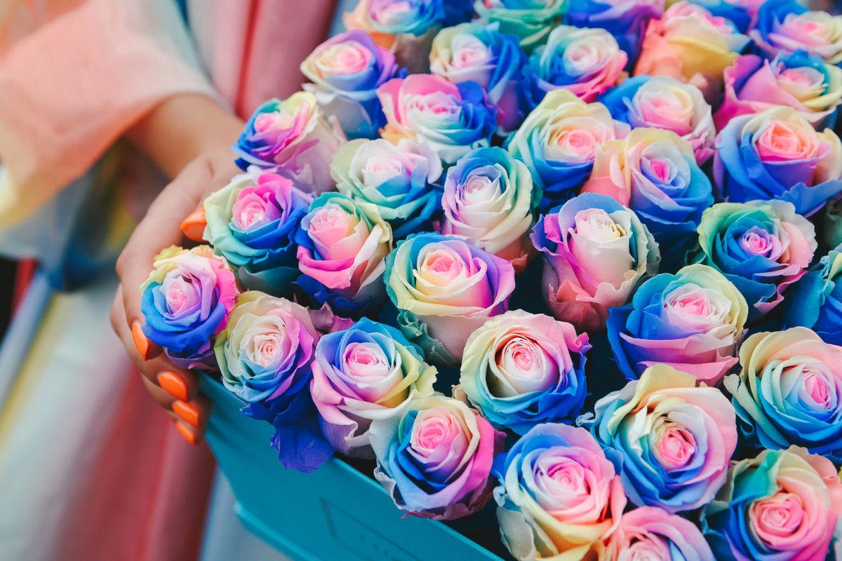 фотография цветная роза очень