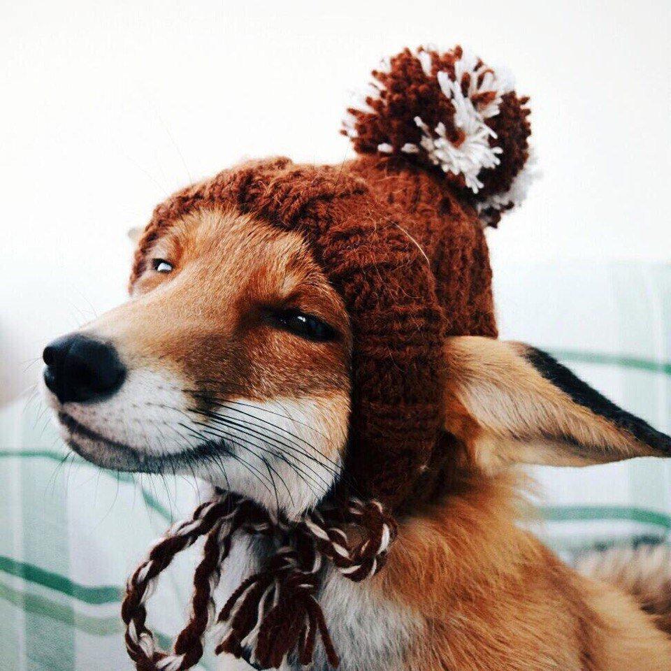 Открытки день, потеплее одевайся картинки
